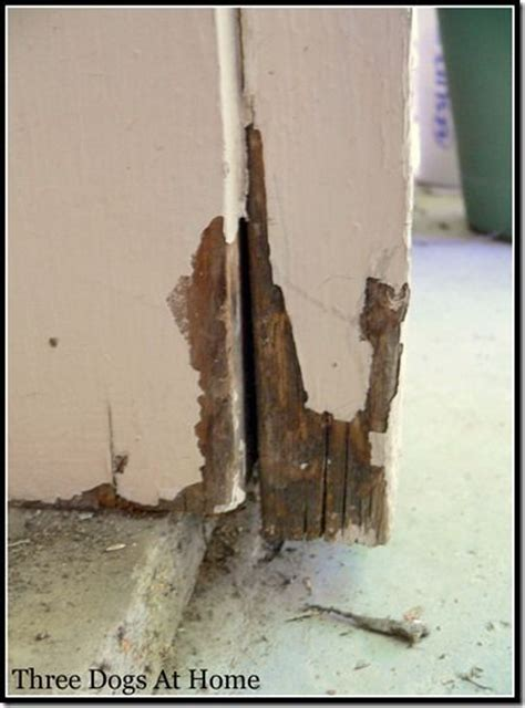 wood frame repair best 25 door frame repair ideas on doorway