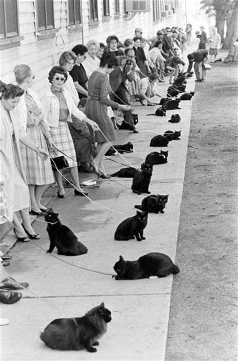 black cat auditions 1961 curious and