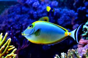 pictures of colorful fish colorful fish in the aquarium by xbiscuits on deviantart