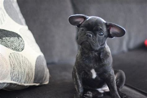 What Breed Of Is Fashionable Right Now by Breeds Everyone Is Looking To Adopt Right Now