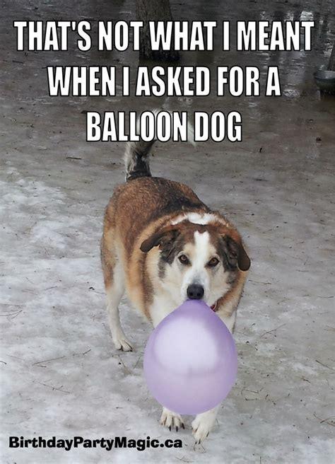 Balloon Memes - balloon dog meme balloon fun pinterest meme