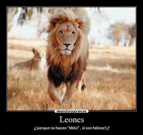 imagenes de leones fuertes im 225 genes leones tristes im 225 genes y frases tristes