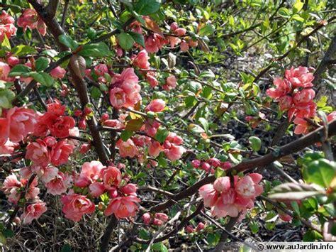 Arbuste A Fleurs by Des Arbustes 224 Fleurs Pour L Hiver