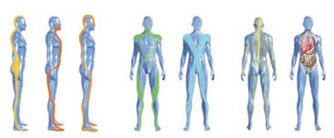 cadenas musculares youtube 191 qu 233 es el entrenamiento por cadenas musculares