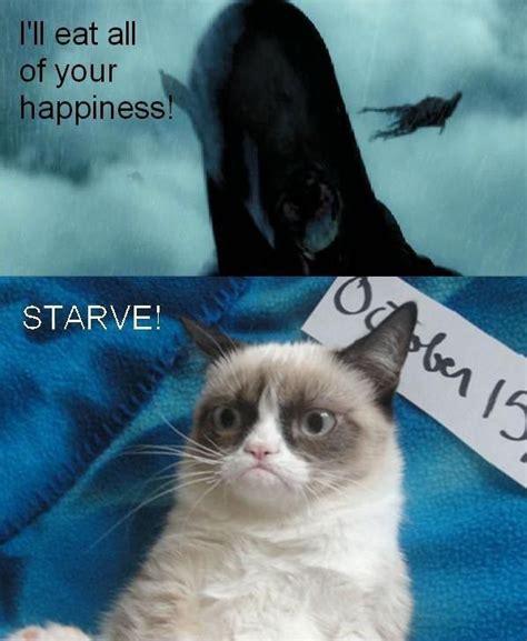 Cute Cat Meme Generator - 3703 best images about grumpy cat cute cat on pinterest