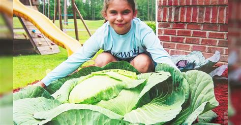 a little girl grew a 40 pound cabbage feeding 275 people she grows an 40 pound cabbage now what she does with it