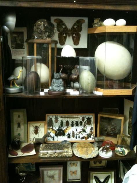 Cabinet Of Curiosities by Cryptomundo 187 For 2011 Make Your Own Cabinet Of Curiosity