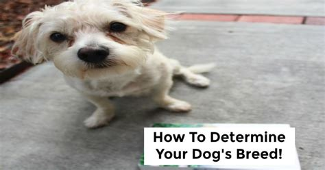 how to tell what breed your is how to determine your s breed socal field trips