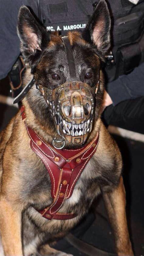 bad k9 muzzle service animals pinterest service