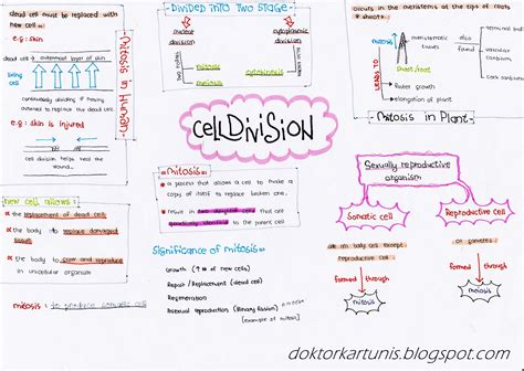 carbohydrates form 4 sleeping blackforest biology form 4 notes cell division