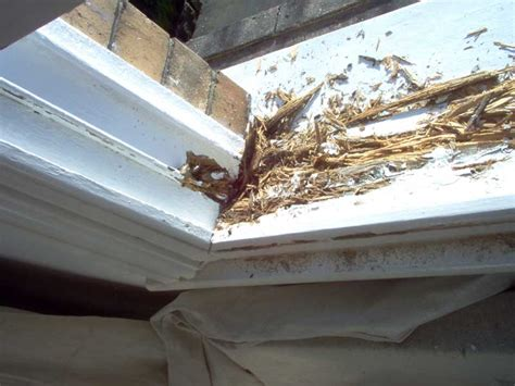 Rotten Window Sill Rotten Window Sill Sash Window Wood Decay