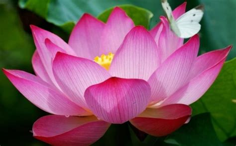 facts about flowers 12 amazing facts about flowers