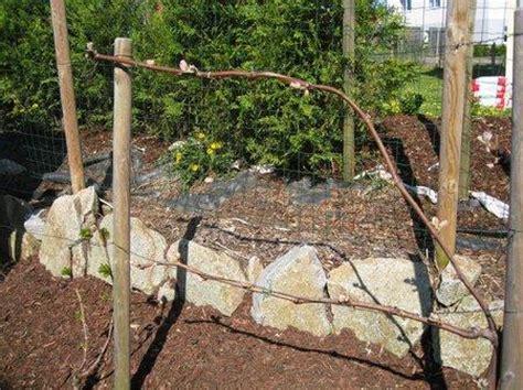 Garten Im Frühling by Wein Im Garten Im April Wein Im Fr 252 Hling