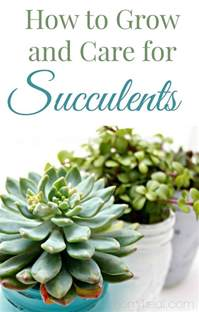 how to grow and care for succulents gardening viral