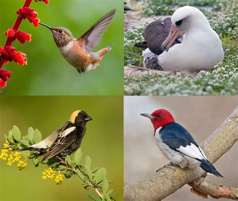 state of north america s birds 2016 more than one third