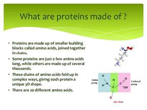 architecture of proteins