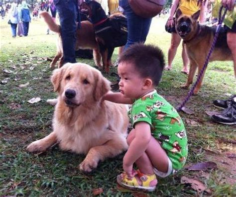 muslims and dogs muslims touch dogs for time at malaysian event