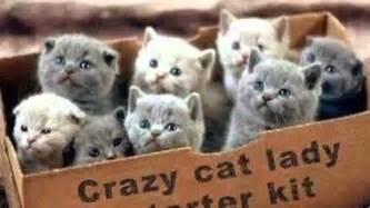 Crazy Cat Lady Starter Kit   YouTube