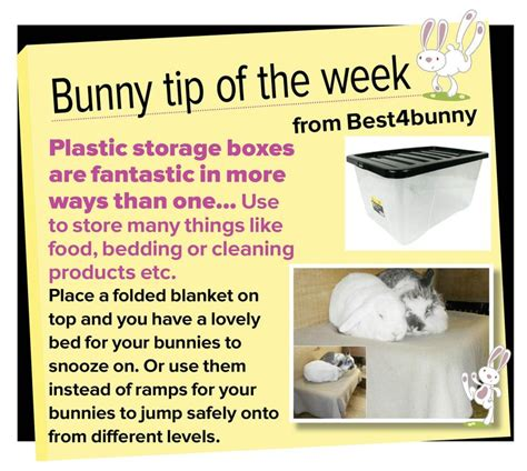 Must For The Week The House Bunny by 131 Best Images About Pet Rabbit On Rabbit