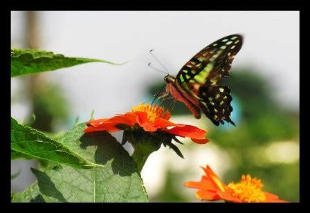 membuat puisi kupu kupu resolusi untuk tahun 2008 catatan dari hati