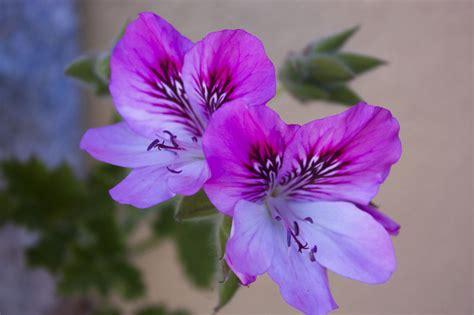 pretty plant names pretty flowers rgoriginals