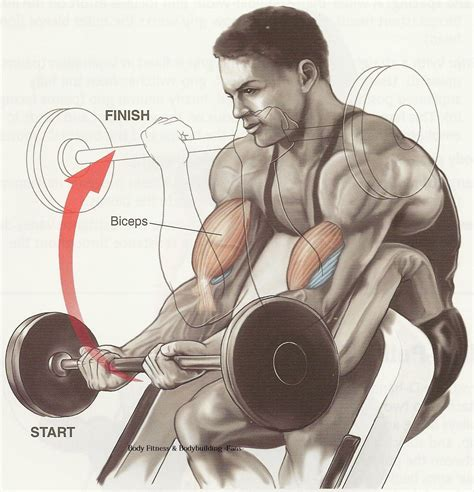 best workout biceps workout tips best workout for biceps bodybuilding