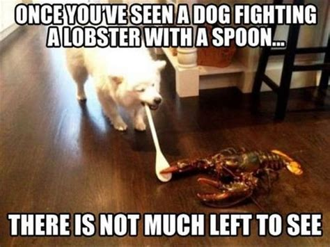 Funny Fighting Memes - bad luck lobster