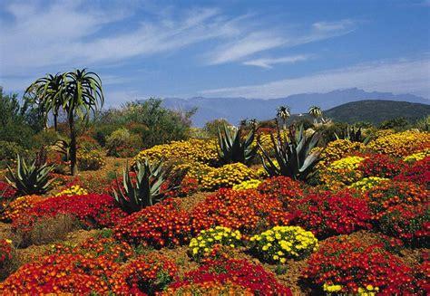Pictures Of Kirstenbosch Botanical Gardens Kirstenbosch Botanical Gardens Places