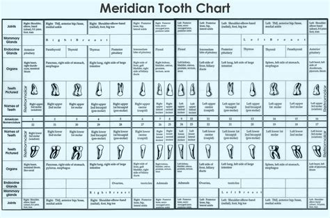 tooth charting diagram 1000 images about naturopathy type thingys on