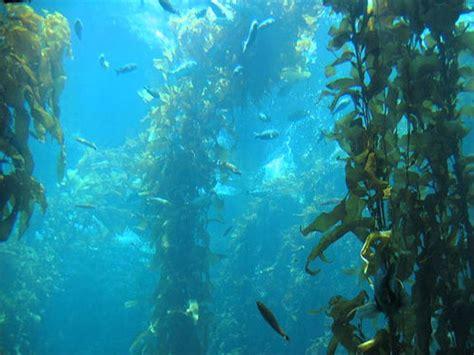 imagenes de algas verdes y azules algas marinas youtube