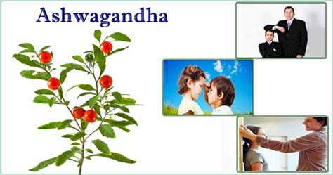 ashwagandha before bed ashwagandha before bed 28 images ashwagandha before bed how to increase height