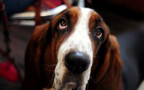 dogs eye is 6908034