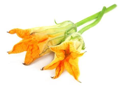 il fiore di zucca roma 5 176 sagra fiore di zucca radio bruno