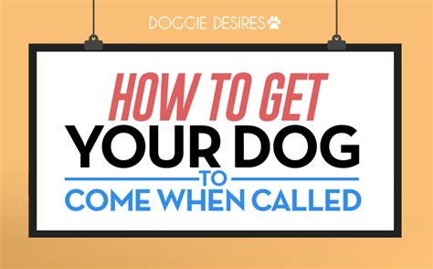 how to a puppy to come how to get your to come when called doggie desires