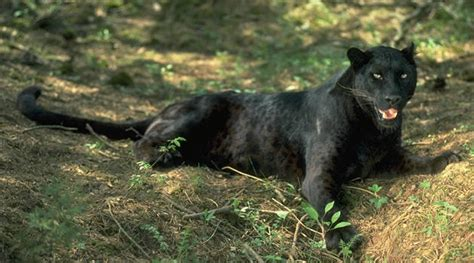 imagenes de animales carniboros los animales carnivoros