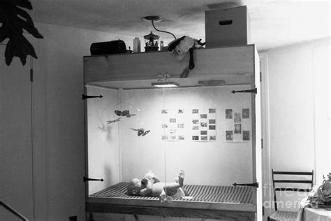Skinner Air Crib by Baby In Skinner Box Photograph By Science Source