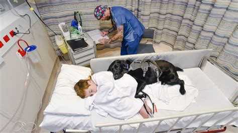 comfort hospital loyal dog jumps on hospital bed to comfort 9 year old boy