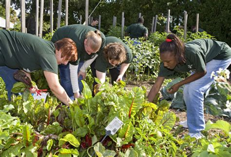Is Working In The Garden by Top 10 Reasons To Donate To Charity