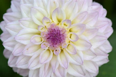 imagenes de flores blancas hermosas jardines verticales huichol selecci 243 n de las m 225 s