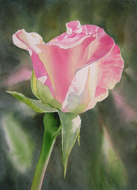 princess diana rose princess diana rose bud by sharon freeman