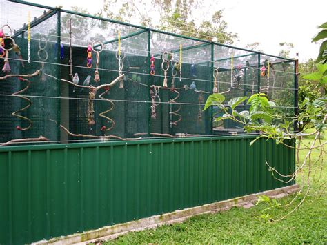 image detail for building a parrot aviary tips advice