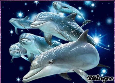 imagenes de amor animadas de delfines delfines fotograf 237 a 128246003 blingee com