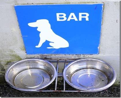 legge sull ingresso dei cani nei luoghi pubblici sulle orme dei nostri cani 187 ristorante