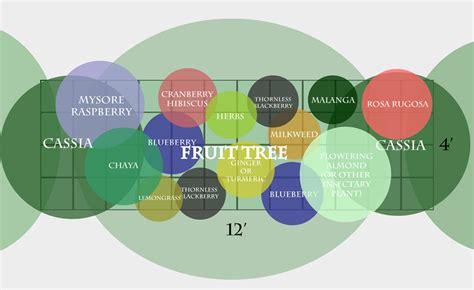a subtropical fruit tree guild the survival gardener