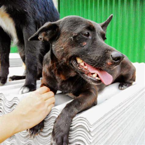 Hari Anjing Anjing Menghilang eggknock anjing sahabat atau santapan
