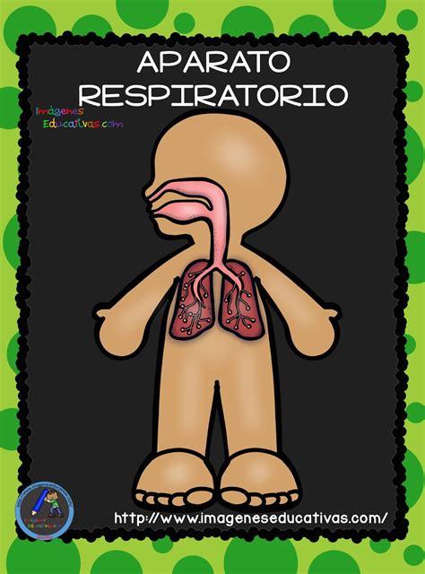 imagenes educativas cuerpo humano sgblogosfera mar 237 a jos 233 arg 252 eso el cuerpo humano