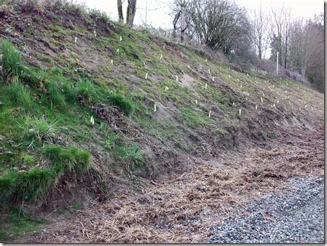 spring planting for erosion control the collie farm blog