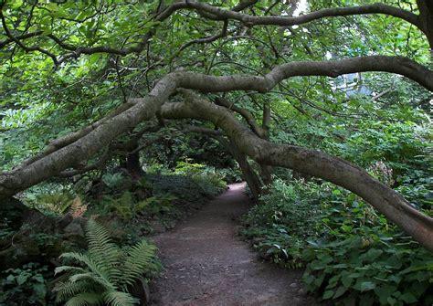 Wege Im Garten by Wege Gartenwege Anlegen 02 Pfad Im Garten Einer