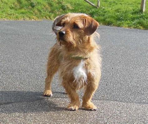 zuhause gesucht hunde zuhause gesucht in neustadt hunde kaufen und verkaufen