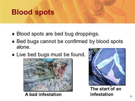 how do bed bugs start how do bed bugs start 28 images tonywarne tickled pink